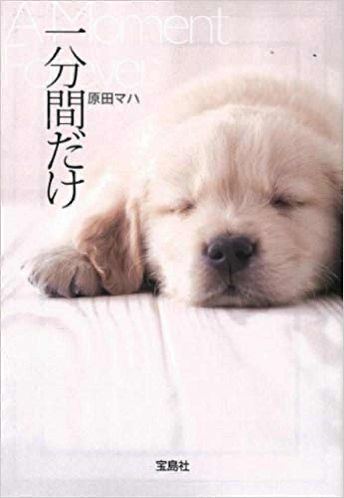 西宮の文学に触れる 第五弾 「旅猫リポート」 有川浩   第六弾 「一分間だけ」 原田マハ -